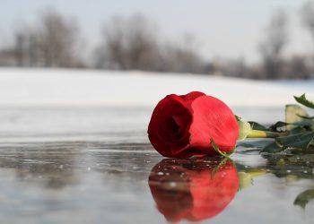 Cum sa aduci iubire in viata ta - sfatulparintilor.ro - pixabay-com - red-rose-on-ice-3189026_1920