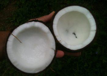dieta cu ulei de cocos - SFATULPARINTILOR.RO - PIXABAY_COM - coconut-648105_1920