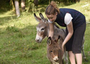 Beneficiile laptelui de magarita - sfatulparintilor.ro - pixabay_com - girl-and-donkey-4340523_1920