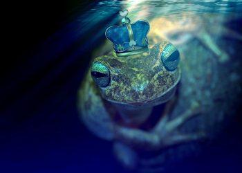 ce inseamna cand visezi broaste - sfatulparintilor.ro - pixabay_com - frog-2257133_1920
