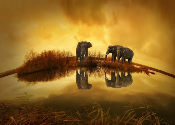 ce inseamna cand visezi elefant - sfatulparintilor.ro - pixabay_com - thailand-142982_1920
