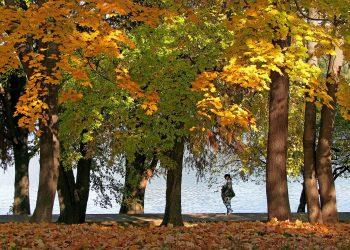 parcuri din Bucureşti - sfatulparintilor.ro - pixabay_com - autumn-landscape-1021513_1920