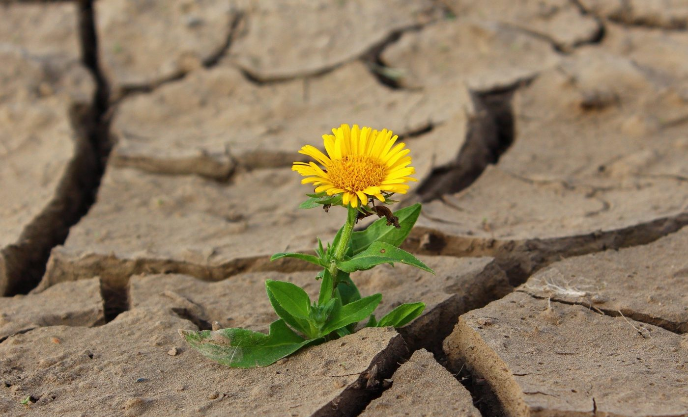 povesti adevarate - sfatulparintilor.ro - pixabay-com - flower-887443_1920