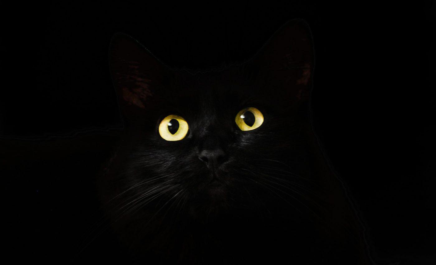 trucuri simple sa scapi de energiile negative - sfatulparintilor.ro - pixabay.com - cats-eyes-2944820_1920