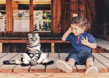 Pisică și copil mic