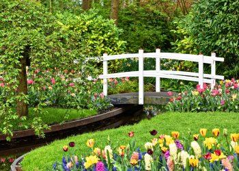 grădini botanice din Olanda